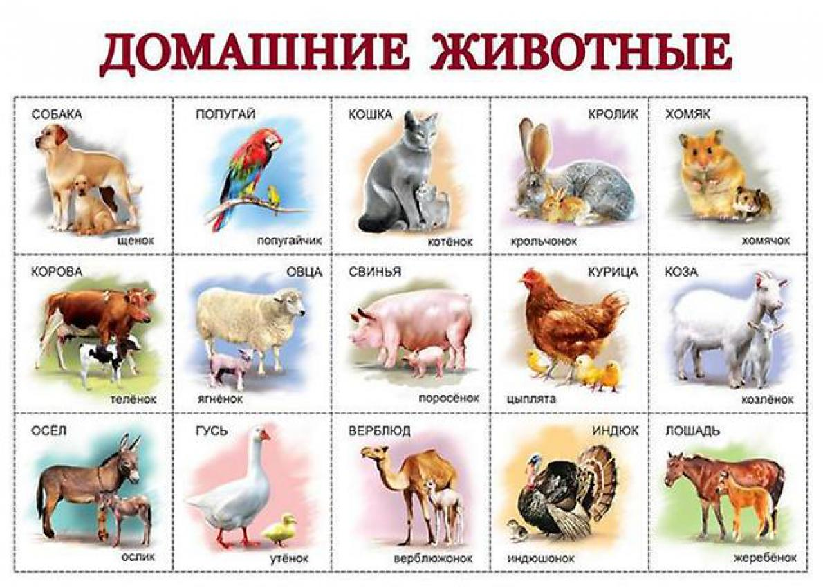 Надписью культура, картинки с домашними животными и их детенышами